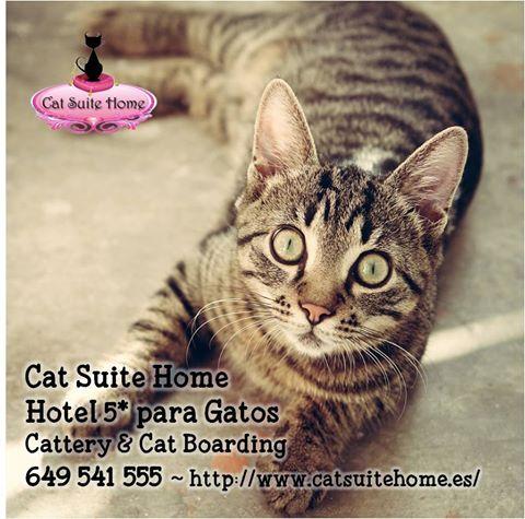¿Te vas de vacaciones y no tienes quién cuide a tu gato?