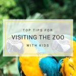 visiting the zoo with kids