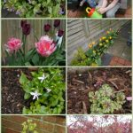 Spring Garden - Yellow Days
