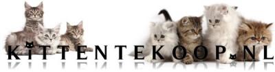 Kitten te Koop