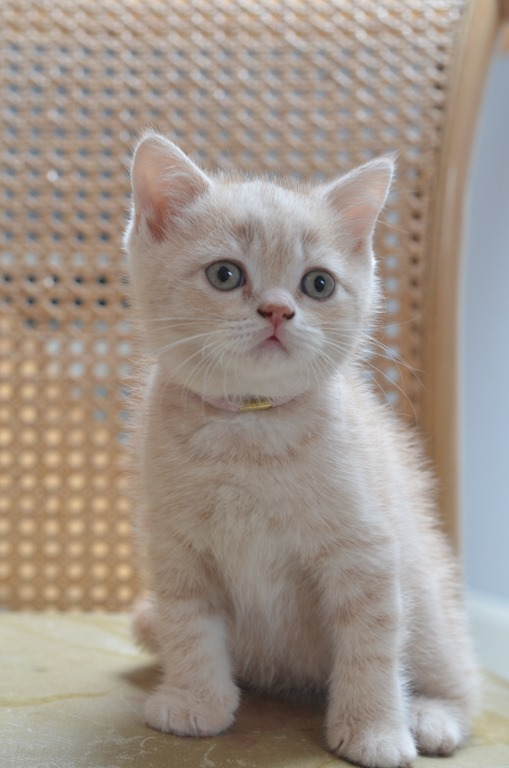 nieuwe foto's van de kittens van Anaïs