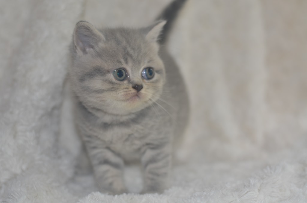 Kittens van Nelleke x liverpool: nieuwe foto's