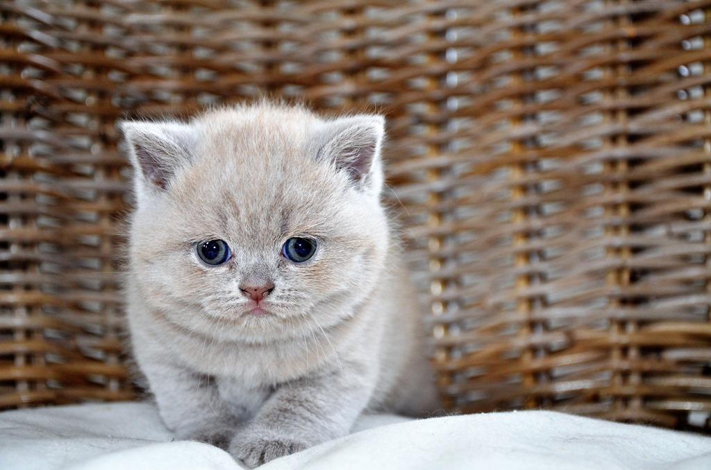 Nieuwe kittens …