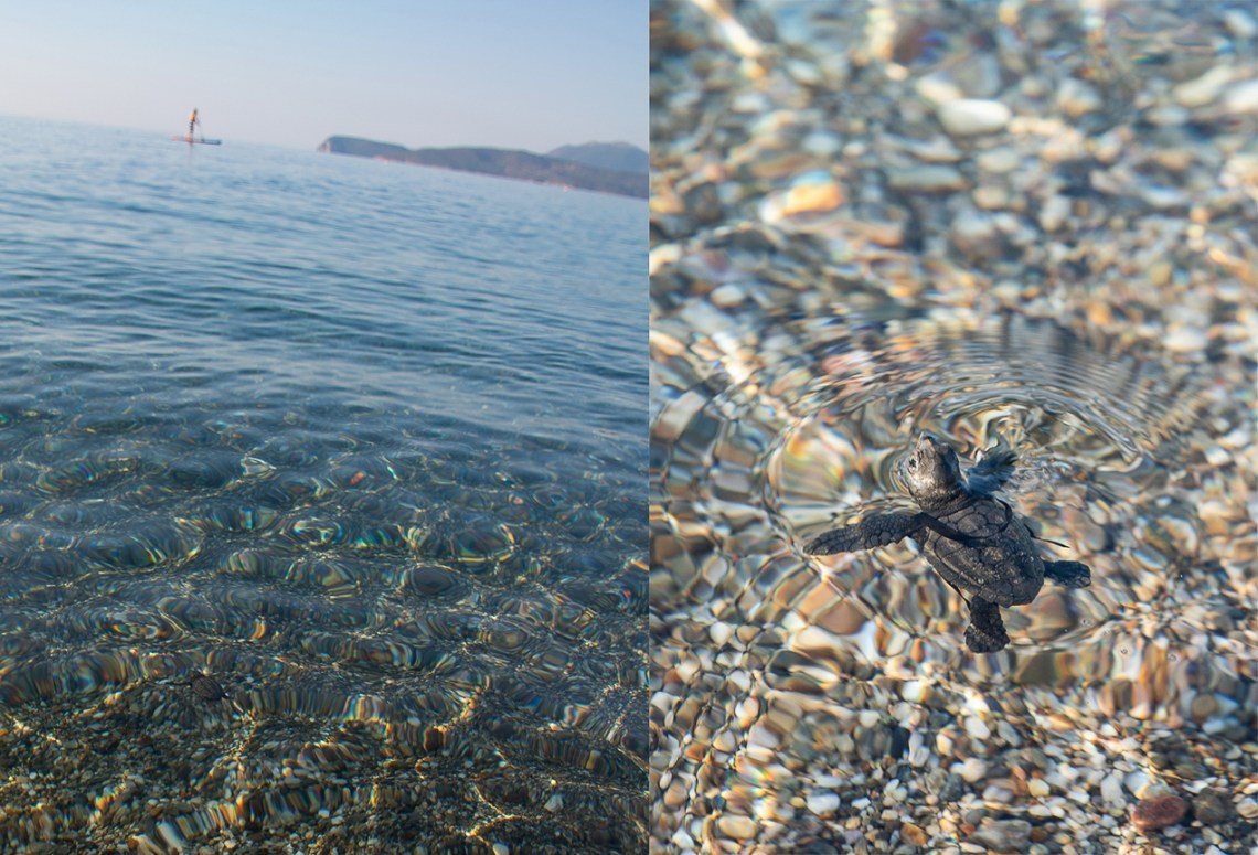 Hatchling seaturtle saved in gythio Greece vacation
