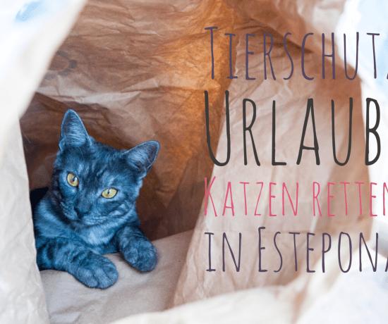Tierschutz Urlaub Katzen retten