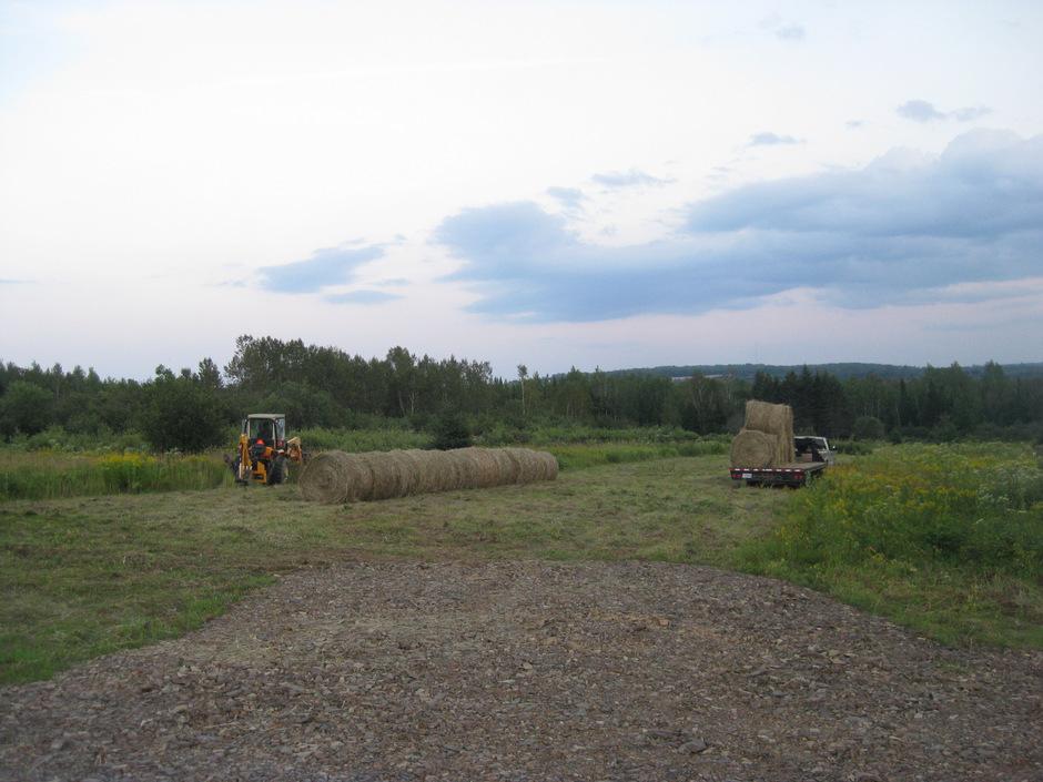 Winter Hay Bale Grazing: Part 2 of 4 - Cattle Starter