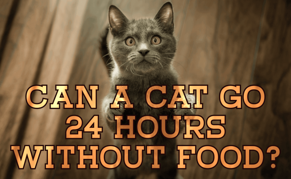 Can a Cat Go 24 Hours Without Food?