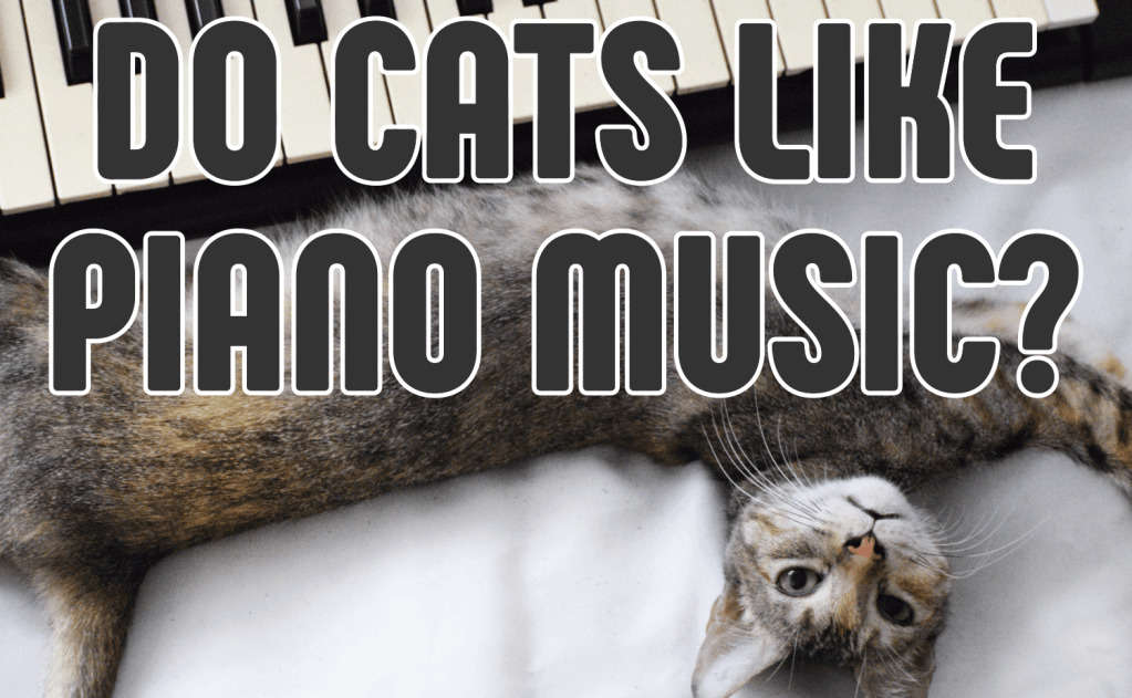 Do Cats Like Piano Music?