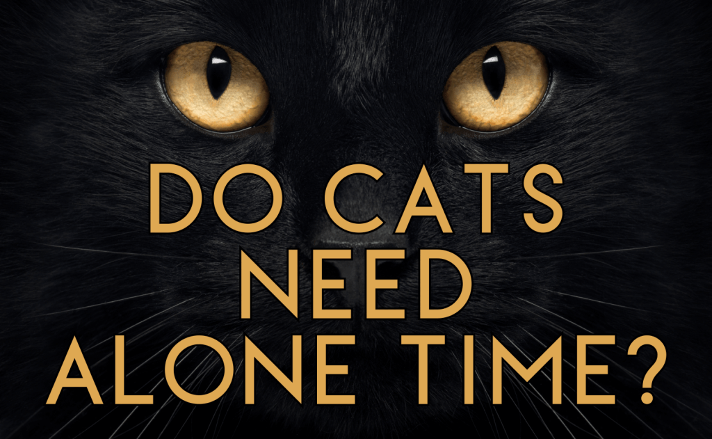 Do Cats Need Alone Time?