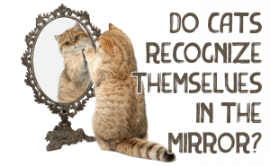 Do Cats Recognize Themselves in the Mirror?