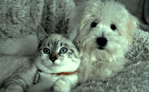 How to Introduce Cats to Dogs?