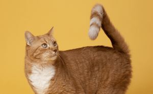 What Are Female Cats Called?