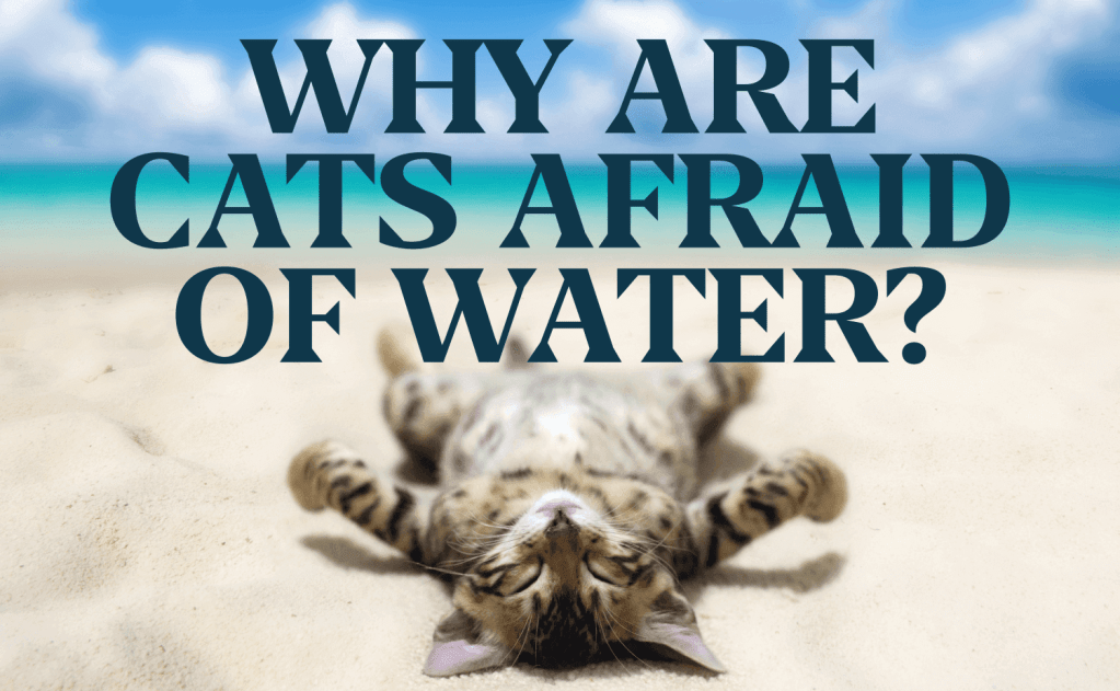 Why Are Cats Afraid of Water?