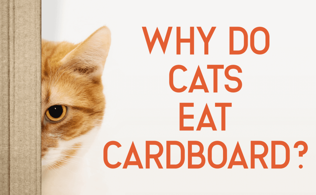 Why Do Cats Eat Cardboard?