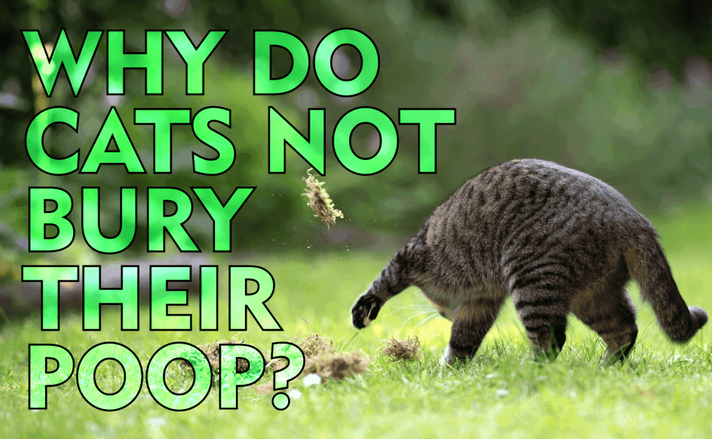 Why Do Cats Not Bury Their Poop?