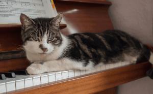 Do Cats Like Piano Music?