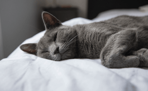Why Do Cats Like To Sleep at the Foot of the Bed?