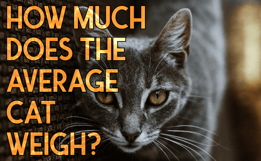How Much Does The Average Cat Weigh?