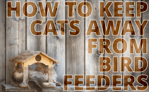 How To Keep Cats Away From Bird Feeders?