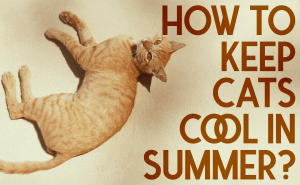 How To Keep Cats Cool In Summer?