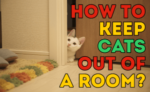 How To Keep Cats Out of a Room?