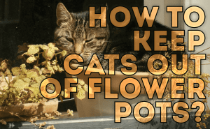 How To Keep Cats Out of Flower Pots?