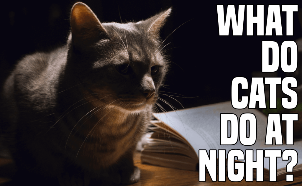 What Do Cats Do At Night?