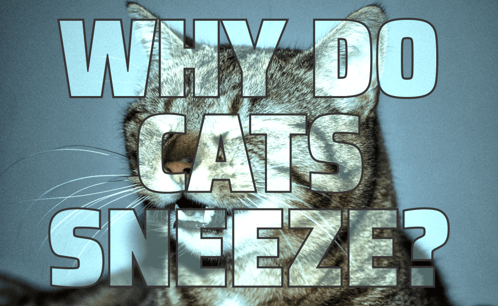 Why Do Cats Sneeze?