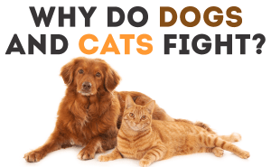 Why Do Dogs And Cats Fight?
