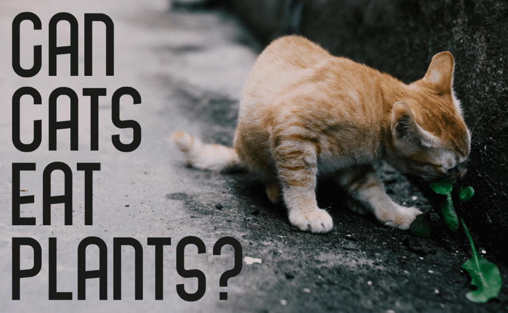 Can Cats Eat Plants?