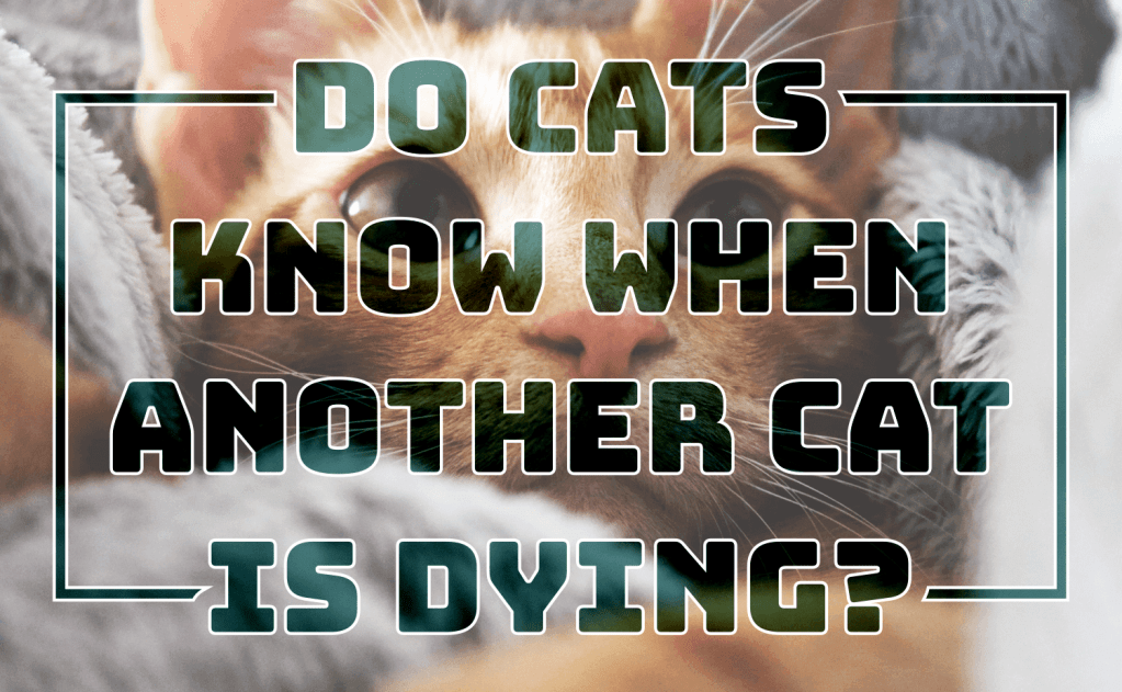 Do Cats Know When Another Cat Is Dying?