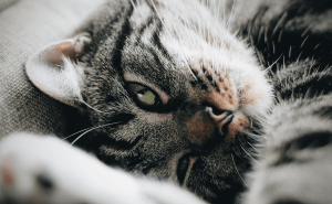 Why Do Cats Rub Their Faces on Things?