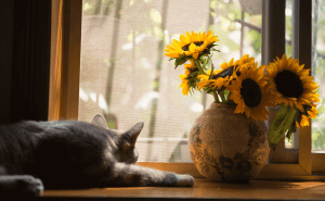 How to Keep Cats Out of Flower Pots