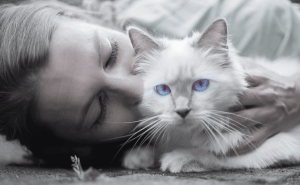 What Do Cats Think When We Kiss Them?