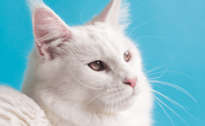 Can Cats Eat Croissants?