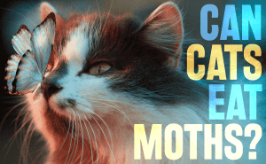 Can Cats Eat Moths?