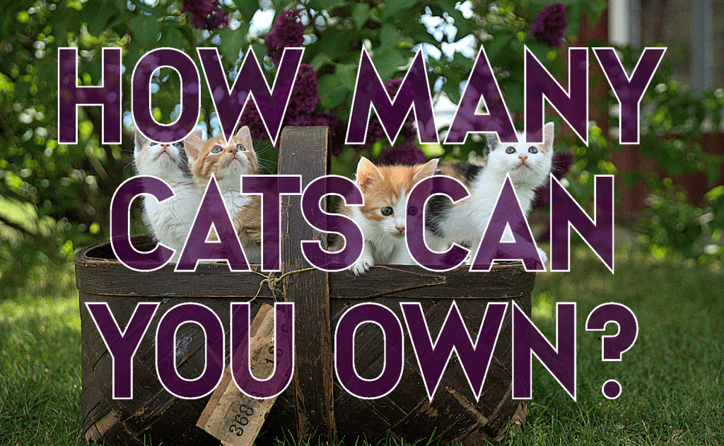 How Many Cats Can You Own?