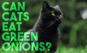 Can Cats Eat Green Onions?