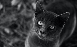 Can Cats Eat Mackerel?