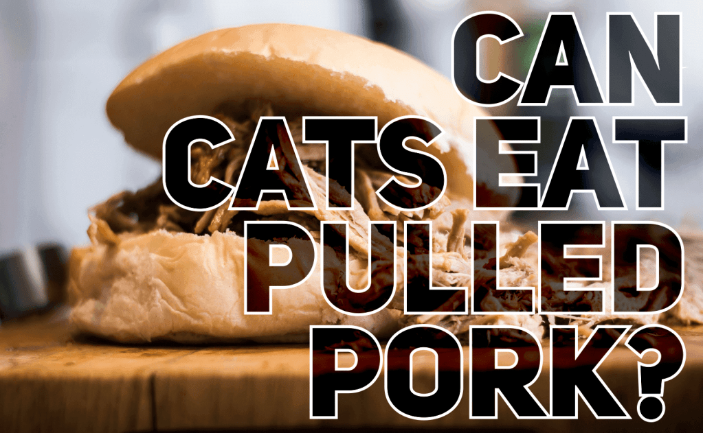Can Cats Eat Pulled Pork?