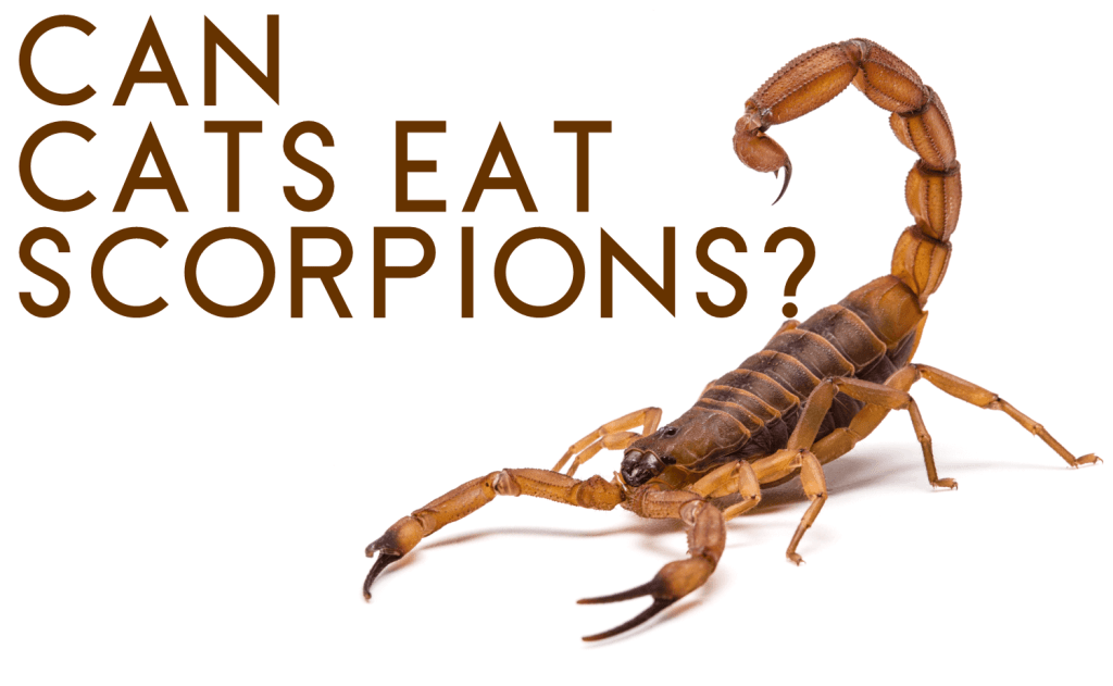 Can Cats Eat Scorpions?
