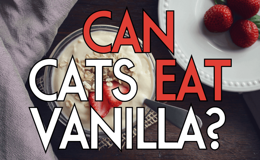 Can Cats Eat Vanilla?