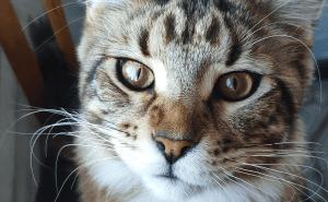 Can Cats Eat Vanilla?