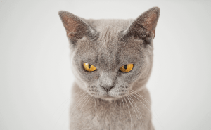 How Do You Treat Dry Skin in a Cat?