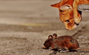 Why Do Cats Play With Mice?
