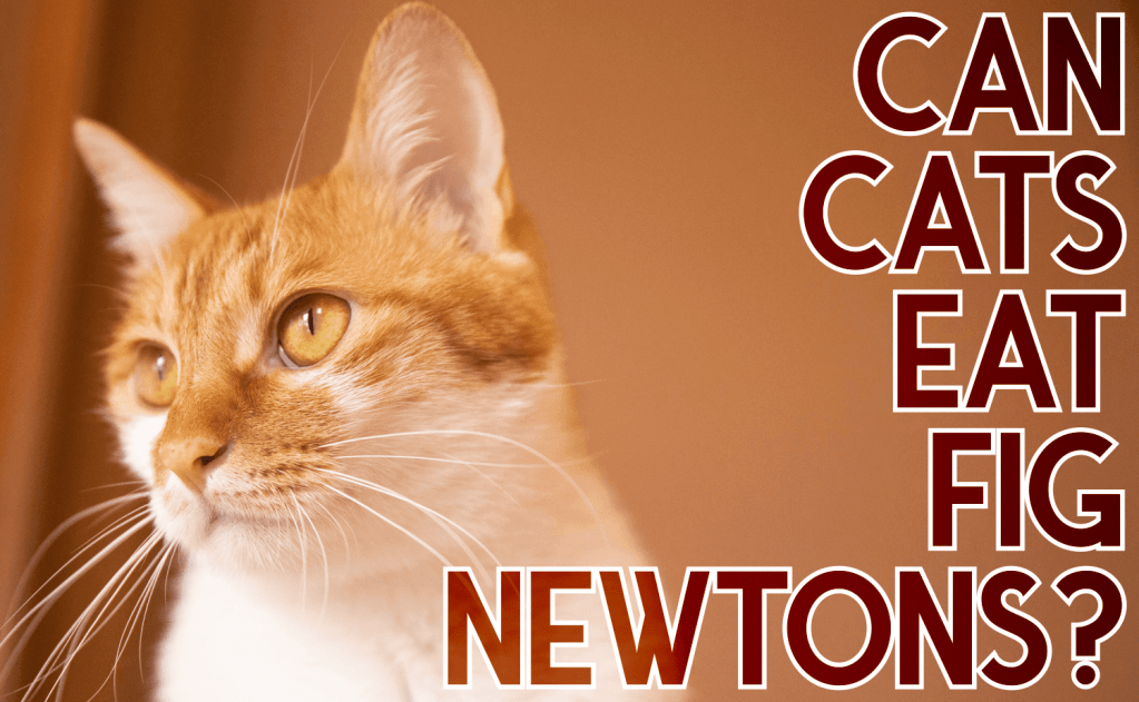 Can Cats Eat Fig Newtons?