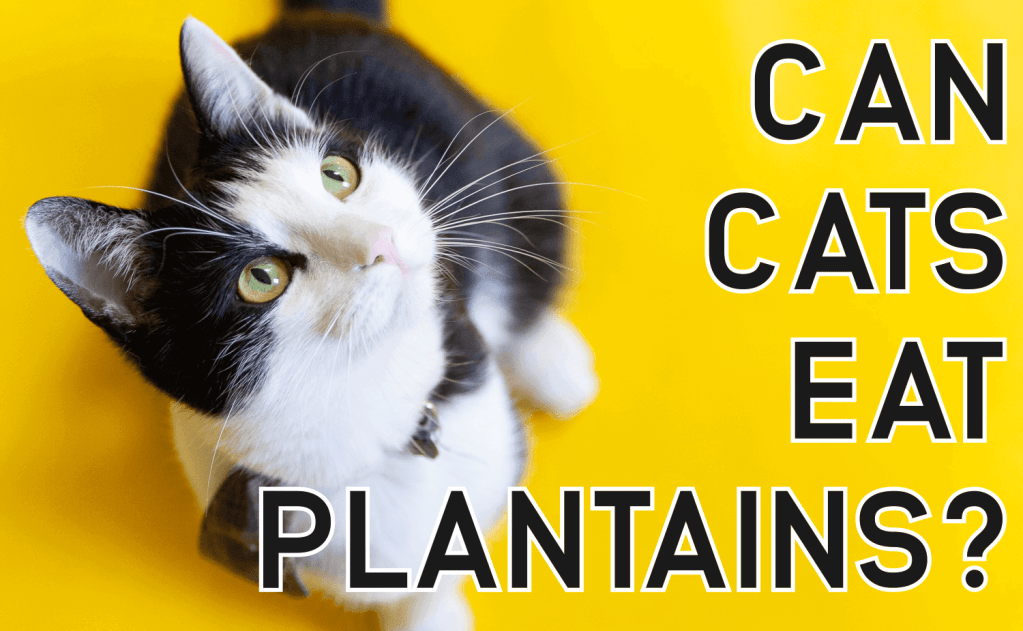 Can Cats Eat Plantains?