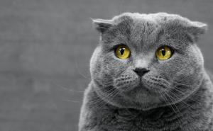 How Often Do Cats Fart?