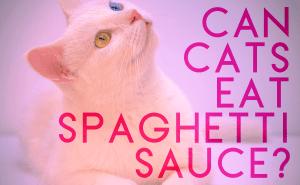 Can Cats Eat Spaghetti Sauce?