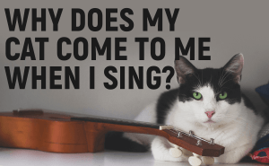 Why Does My Cat Come to Me When I Sing?